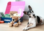 PupJoy influencer marketing campaign