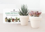 Succulents Box influencer marketing campaign